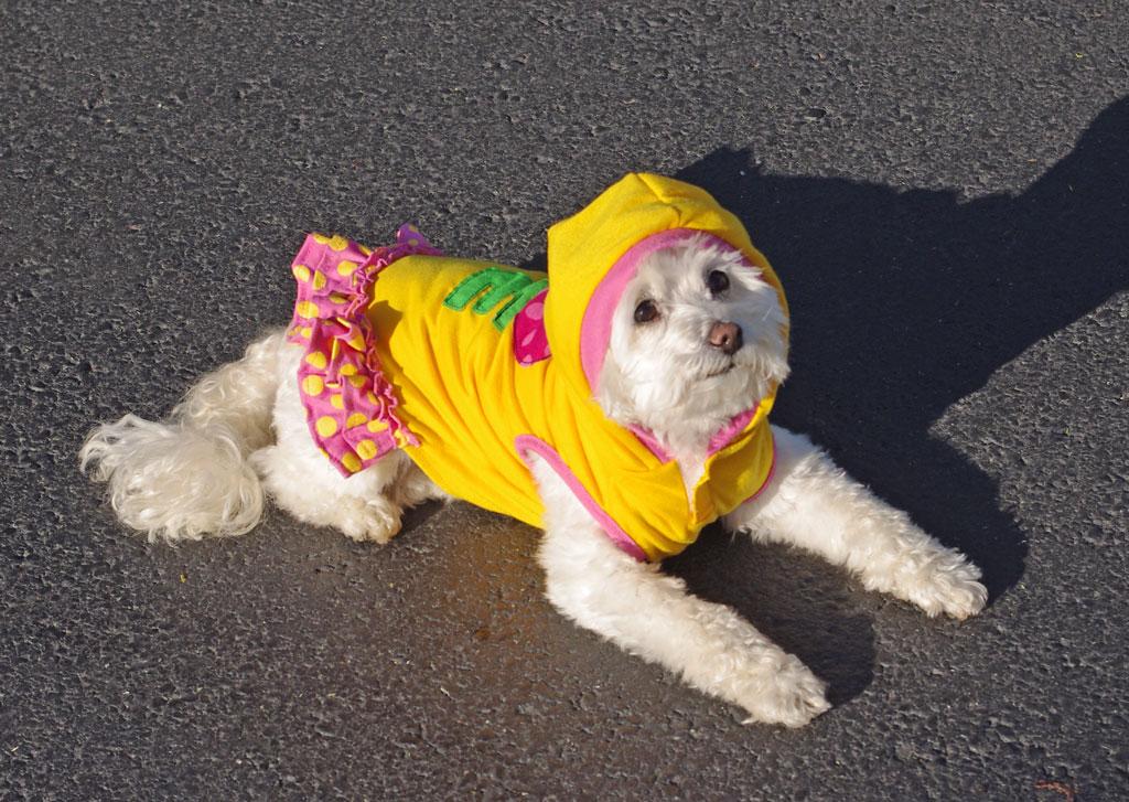 love-dog-hoodie